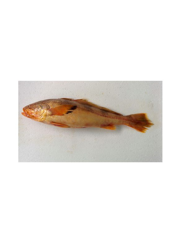 Butterfish Nebris Microps